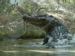 Grandeurs Nature - Le plus grand crocodile du monde