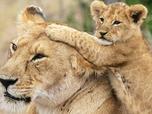 Tendresses animales