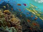 Les mystères de la Barrière de corail