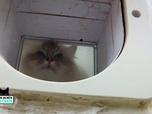 La vie secrète des chats - Astuce : comment inciter les chats à utiliser leur chatière